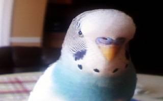 Chippy mini portrait.jpg