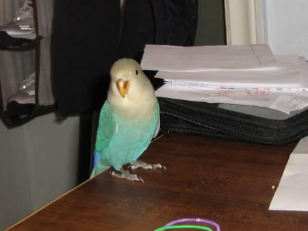 bird 082.jpg