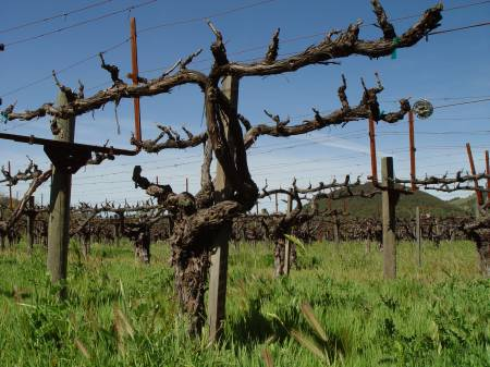 Chateau_Monetelena,_Napa_Valley_California.jpg